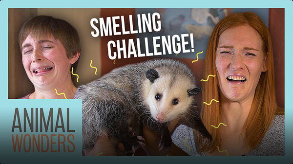 Guess That Animal By Smell Challenge!