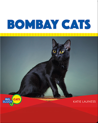 Bombay Cats