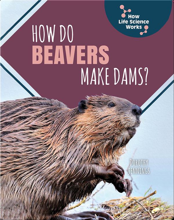 How Do Beavers Make Dams?