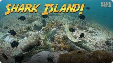 Jonathan Bird's Blue World: Shark Island, Oman!