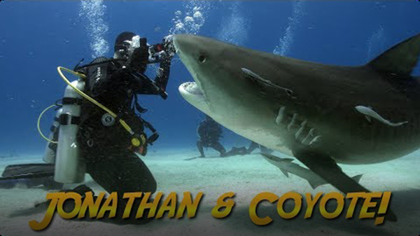 Jonathan Bird's Blue World: Tiger Sharks with Coyote Peterson!