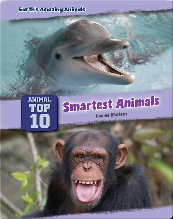 Top Ten Smartest Animals