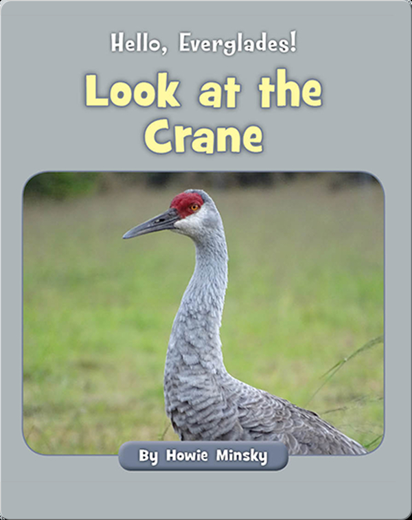 Hello, Everglades!: Look at the Crane