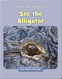 Hello, Everglades!: See the Alligator