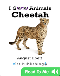 I See Animals: Cheetah