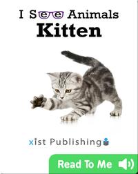I See Animals: Kitten