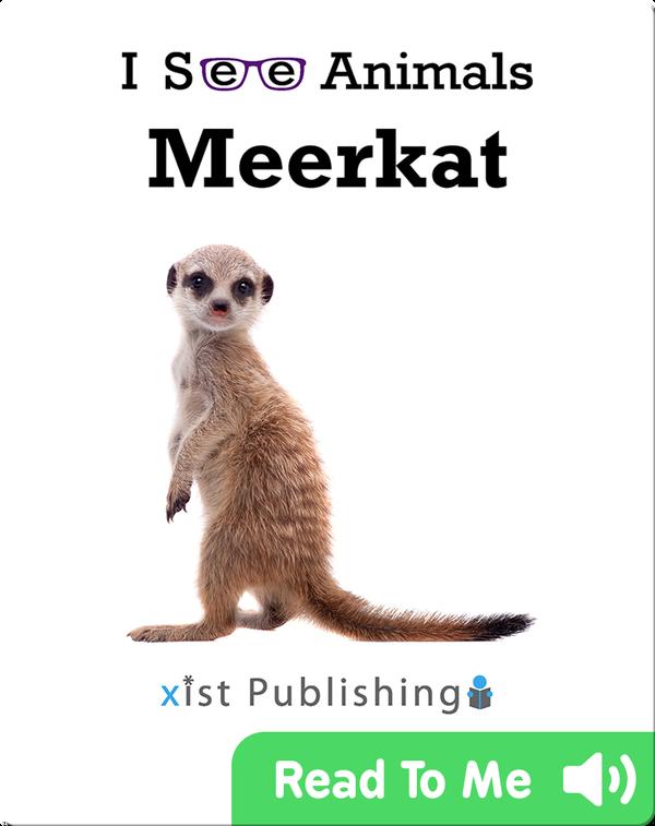 I See Animals: Meerkat