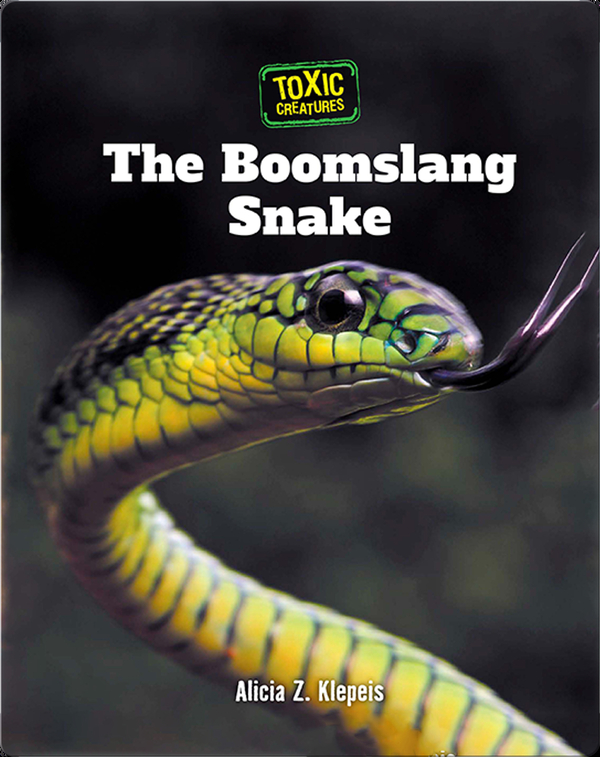 Toxic Creatures: The Boomslang Snake