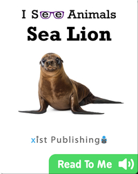 I See Animals: Sea Lion