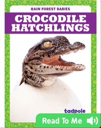 Rain Forest Babies: Crocodile Hatchlings