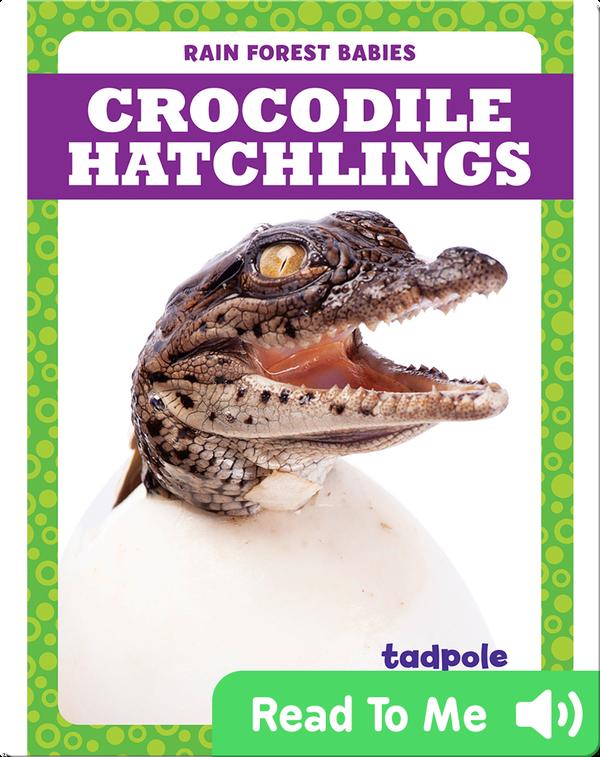 Rain Forest Babies: Crocodile Hatchlings