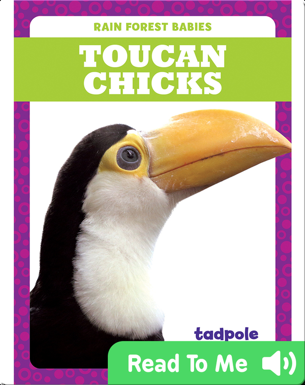 Rain Forest Babies: Toucan Chicks