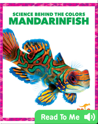 Science Behind the Colors: Mandarinfish