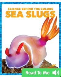 Science Behind the Colors: Sea Slugs