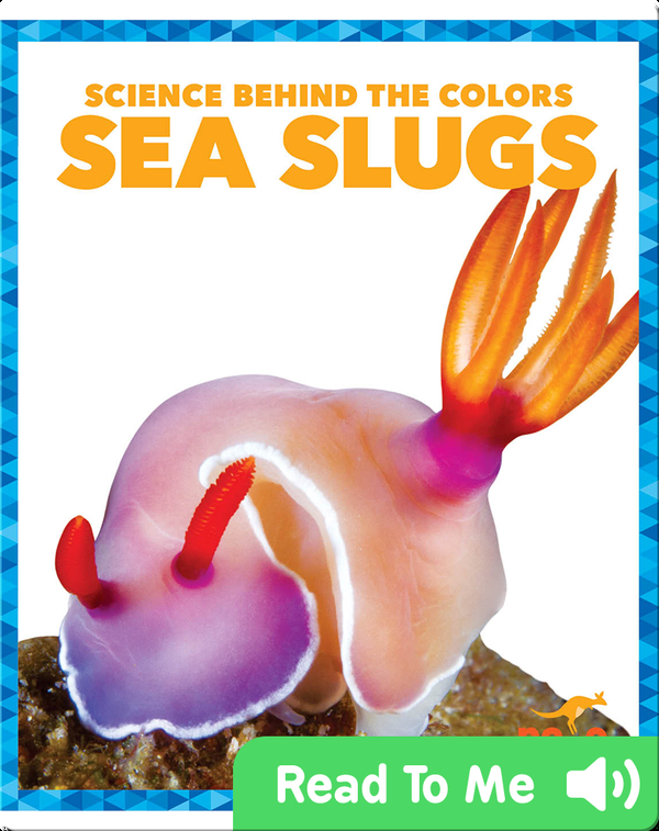 Science Behind the Colors: Sea Slugs