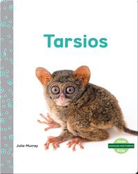 Animales nocturnos: Tarsios