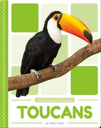 Rain Forest Animals: Toucans
