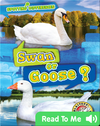Spotting Differences: Swan or Goose?
