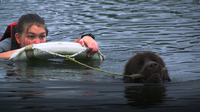 Dogs in the Water: Water Rescue Dogs