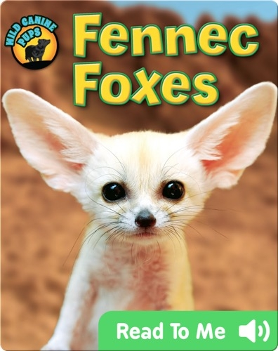 Fennec Foxes (Wild Canine Pups)
