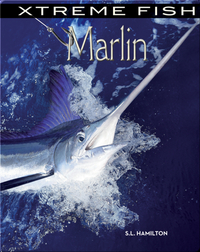 Xtreme Fish: Marlin