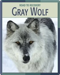 Road To Recovery: Gray Wolf