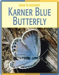 Road To Recovery: Karner Blue Butterfly