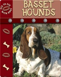 Eye To Eye With Dogs: Basset Hounds