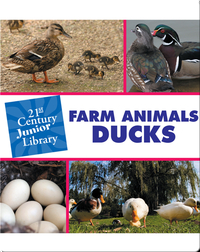 Farm Animals: Ducks