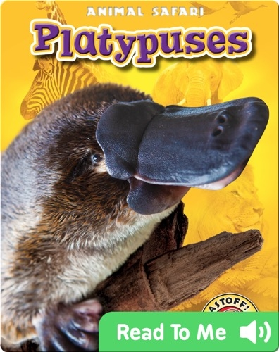 Platypuses: Animal Safari