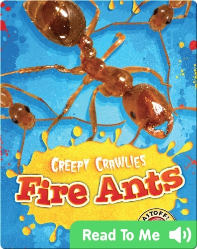 Creepy Crawlies: Fire Ants