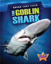 Shark Fact Files: The Goblin Shark