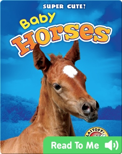 Super Cute! Baby Horses