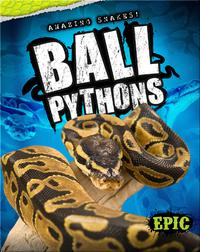 Amazing Snakes! Ball Pythons