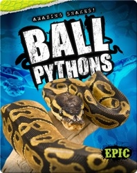 Amazing Snakes! Ball Pythons