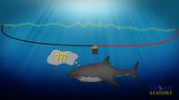 Shark Electrosensory System
