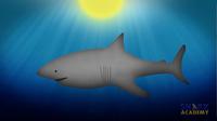 Shark Coloration