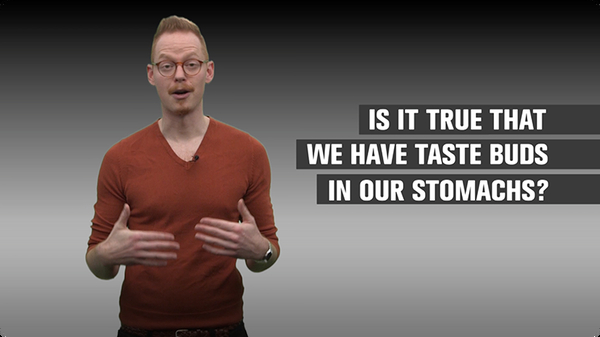 Is it True We Have Taste Buds in Our Stomachs?