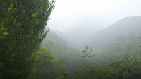 Water in the Cloudforest