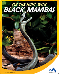 On the Hunt With Black Mambas