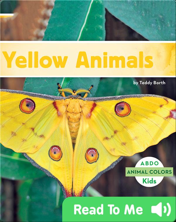 Yellow Animals