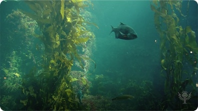 Kelp Forest Ecosystem