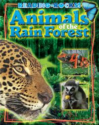 Animals of the RainForest