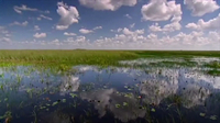 Ecosystems - The Florida Everglades