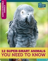 12 Super-Smart Animals You Need To Know