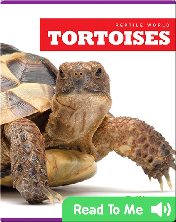 Reptile World: Tortoises