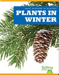 What Happens In Winter? Plants In Winter