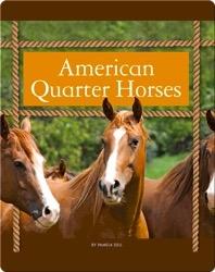 American Quarter Horses
