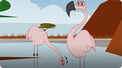 I'm a Flamingo