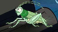 I'm a Cricket